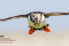 SNIWP_Wildlife_Highly Commended_October 16